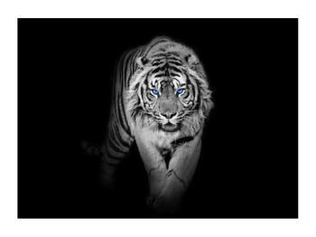Obraz tygra (K014968K7050)