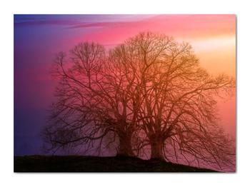 Obraz stromov v hmle (V020088V7050)