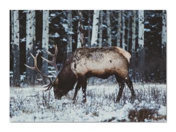 Obraz - jeleň v zime (V020179V7050)