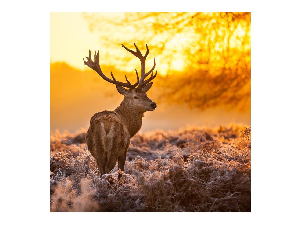 Slika jelena (K011281K7070)