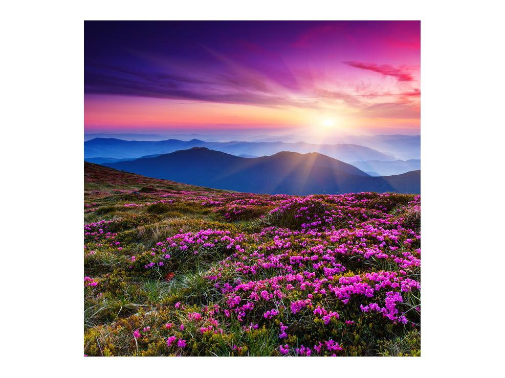 Slika planinskog rascvijetalog krajolika (K011322K7070)