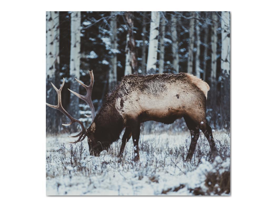 Obraz - jeleň v zime (V020179V7070)