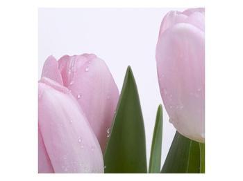 Obraz růžových tulipánů (F000389F7070)