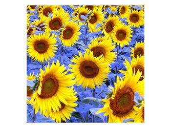 Obraz slunečnic (F000619F7070)