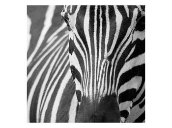 Obraz černobílého detailu zebry (F000715F7070)