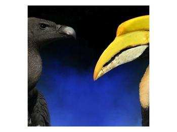 Obraz ptačích zobáku (F001358F7070)
