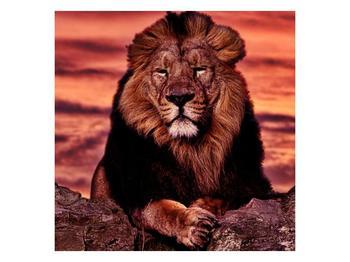 Obraz krále zvířat (F001507F7070)
