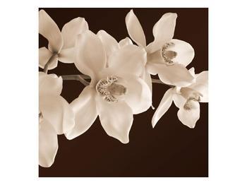 Krásný obraz bílých květin (F001888F7070)