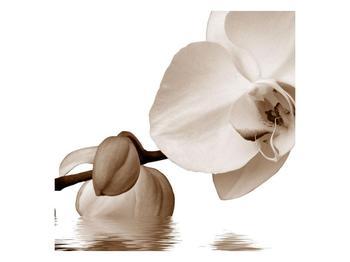 Krásný obraz bílé orchideje (F001900F7070)