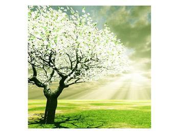 Obraz stromu na jaře (F002291F7070)
