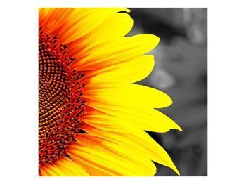 Obraz květu slunečnice (F002400F7070)