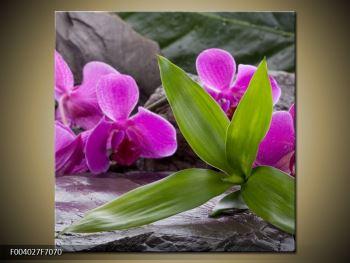 Obraz fialových orchidejí s listím (F004027F7070)