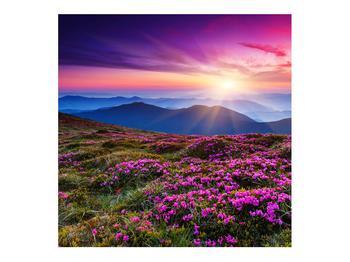 Obraz horskej rozkvitnutej krajiny (K011322K7070)
