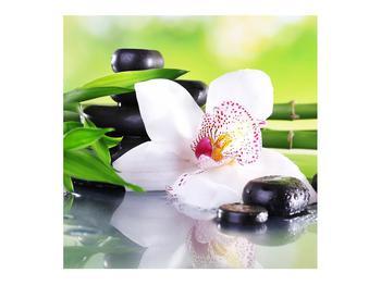 Obraz orchidee (K011995K7070)
