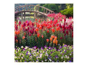 Obraz kvetín (K012048K7070)