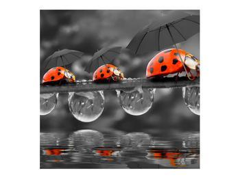 Obraz lienok sedembodkových s dáždnikmi (K012059K7070)