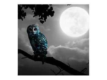 Tablou cu bufnița nocturnă (K012185K7070)