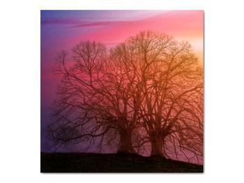 Obraz stromov v hmle (V020088V7070)