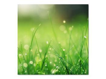 Obraz - rosa na tráve (V020169V7070)