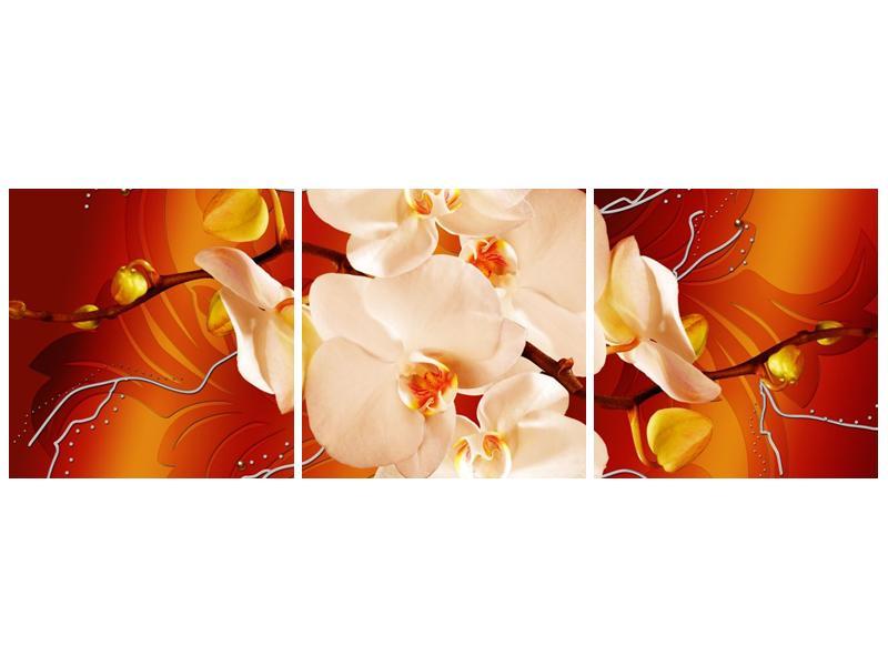 Obraz bílých orchidejí (F005694F9030)