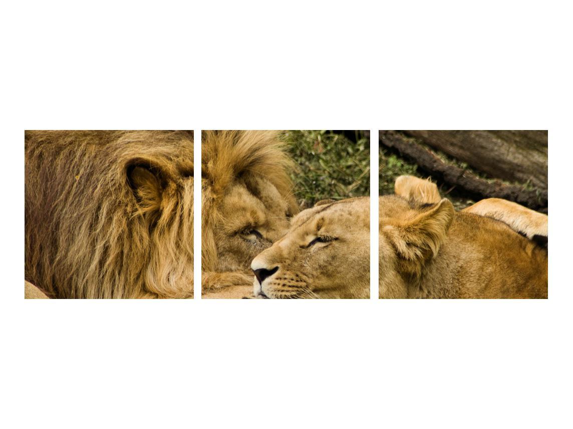 Moderna slika K010140K9030 (K010140K9030)