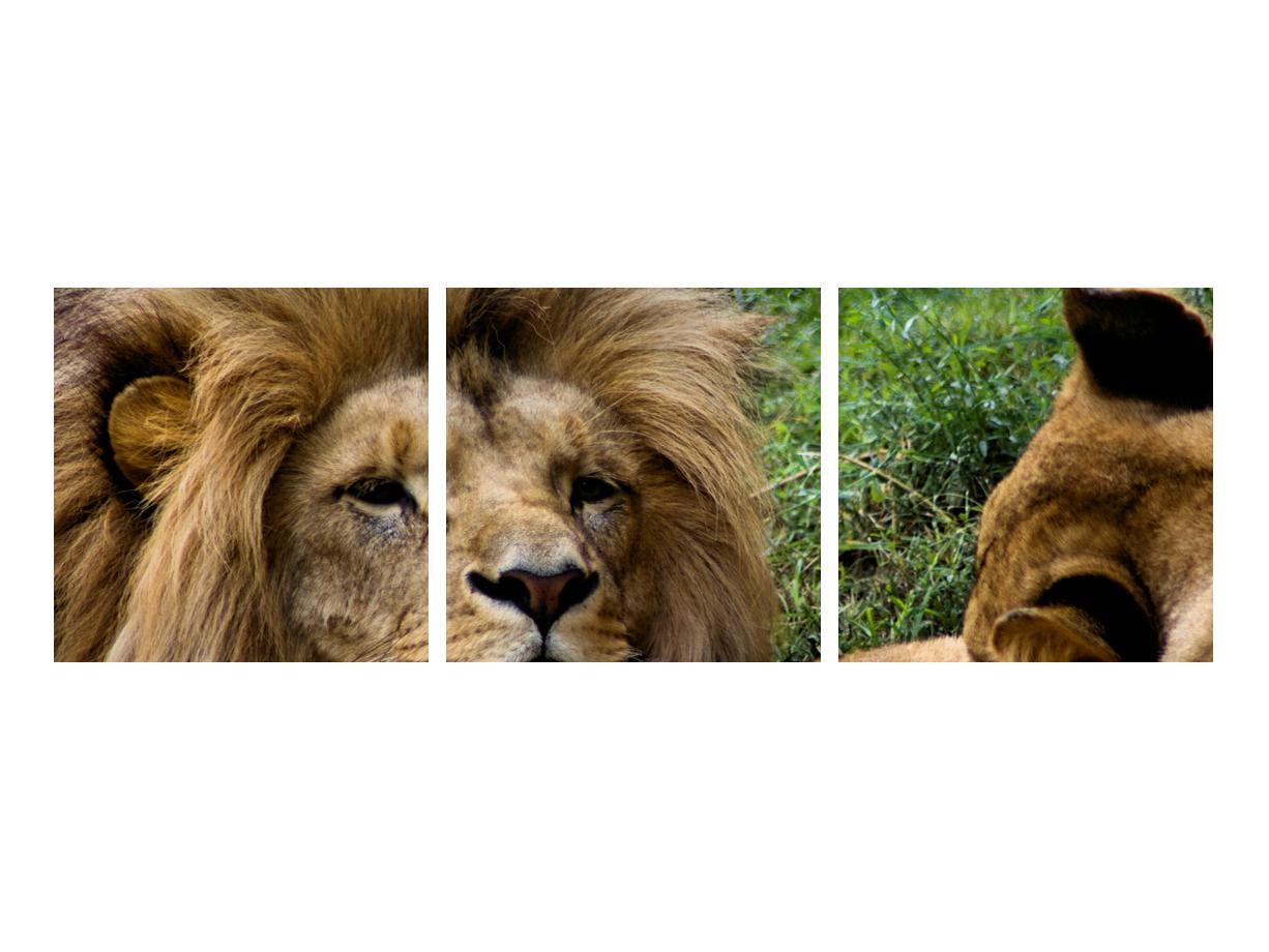 Moderna slika K010143K9030 (K010143K9030)