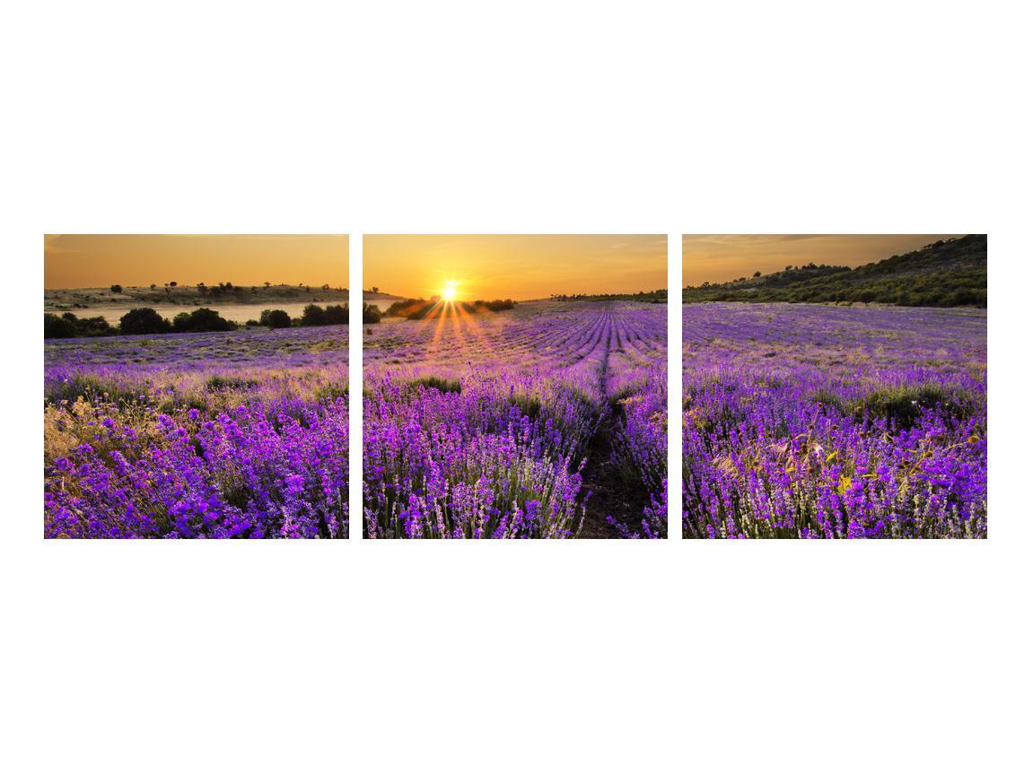 Obraz levandulového pole (K011154K9030)