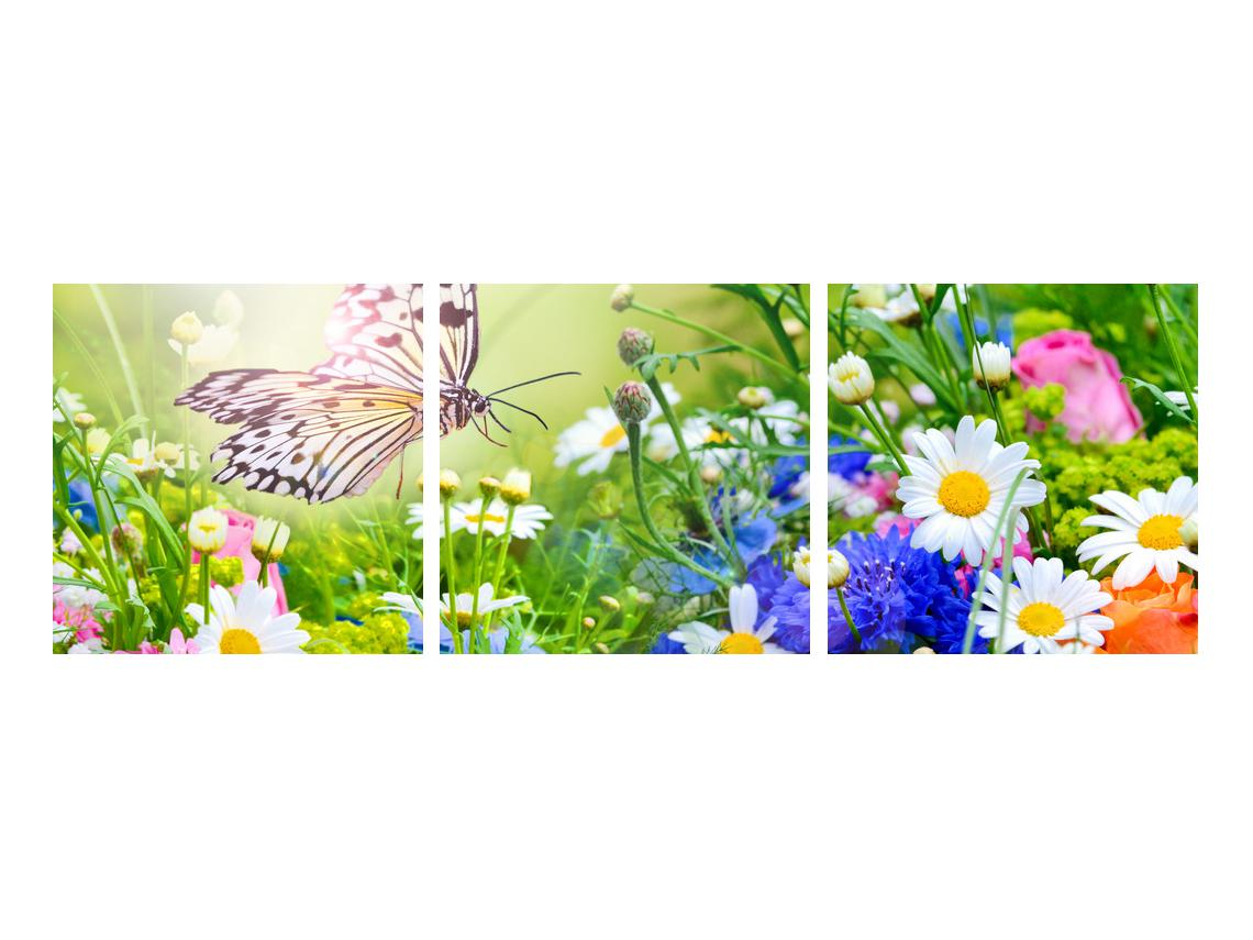 Slika poletnih cvetov z metuljem (K012220K9030)