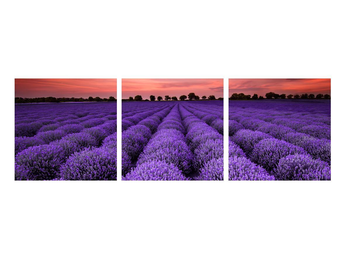 Slika polja lavande (K014685K9030)