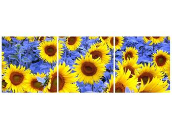 Obraz slunečnic (F000619F9030)