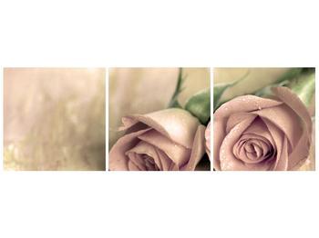 Obraz jemných růží (F001212F9030)