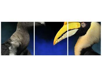 Obraz ptačích zobáku (F001358F9030)