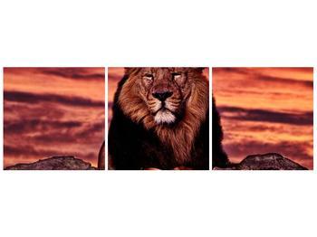 Obraz krále zvířat (F001507F9030)