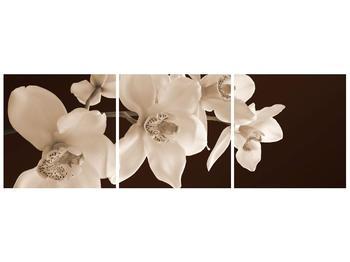 Krásný obraz bílých květin (F001888F9030)