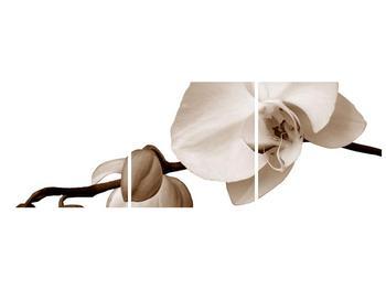 Krásný obraz bílé orchideje (F001900F9030)