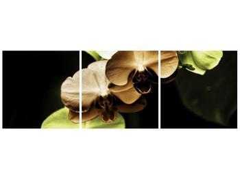 Obraz hnědých a zelených orchideí  (F002723F9030)