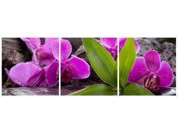 Obraz fialových orchidejí s listím (F004027F9030)