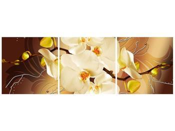 Krásný obraz orchidejí (F005693F9030)