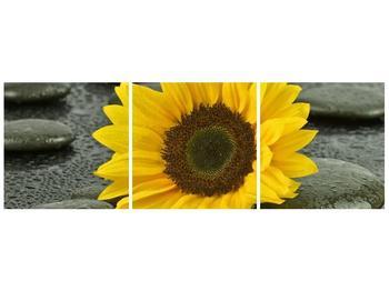 Moderní obraz F005794F9030 (F005794F9030)