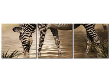 Obraz zebry (K011110K9030)