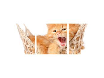 Obraz kočky v síti (K011123K9030)