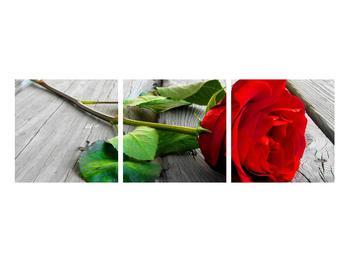 Obraz červené růže (K011140K9030)