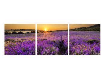 Tablou cu câmp de levandă (K011154K9030)