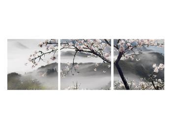 Obraz rozkvetlé jarní krajiny (K011207K9030)