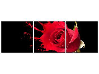 Obraz ruže (K011216K9030)