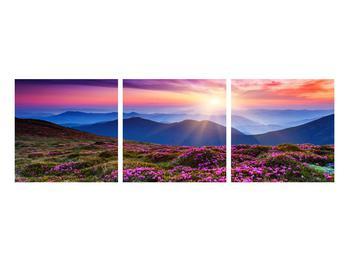 Obraz horské rozkvetlé krajiny (K011322K9030)