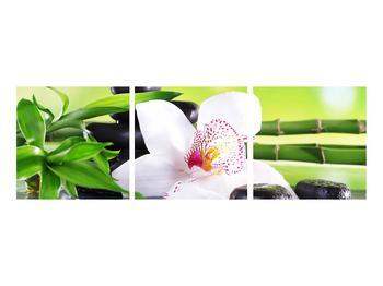 Obraz orchidee (K011995K9030)