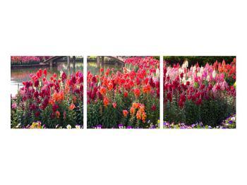 Obraz kvetín (K012048K9030)