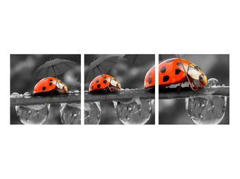 Obraz lienok sedembodkových s dáždnikmi (K012059K9030)