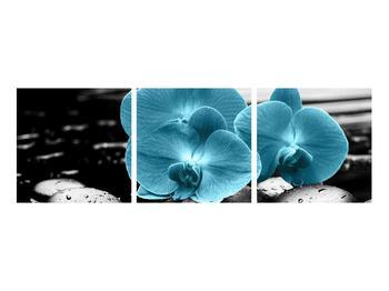 Obraz modrých květů orchideje (K012398K9030)